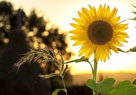 hello-sunshine